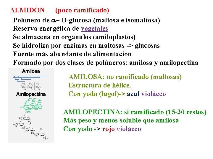 ALMIDÓN (poco ramificado) Polímero de a- D-glucosa (maltosa e isomaltosa) Reserva energética de vegetales