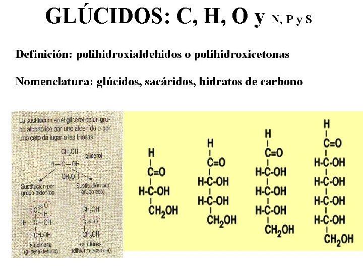 GLÚCIDOS: C, H, O y N, P y S