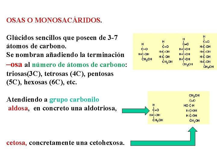 OSAS O MONOSACÁRIDOS. Glúcidos sencillos que poseen de 3 -7 átomos de carbono. Se