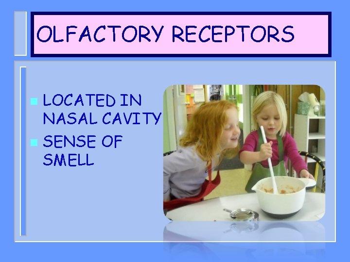 OLFACTORY RECEPTORS LOCATED IN NASAL CAVITY n SENSE OF SMELL n