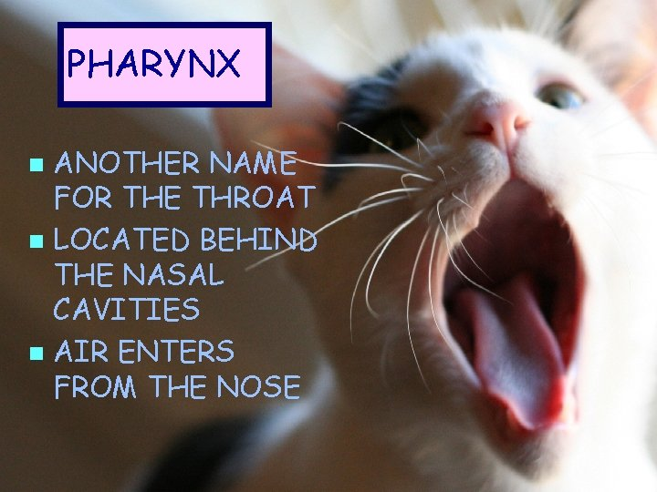 PHARYNX ANOTHER NAME FOR THE THROAT n LOCATED BEHIND THE NASAL CAVITIES n AIR