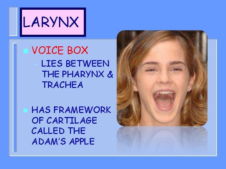 LARYNX n VOICE BOX – n LIES BETWEEN THE PHARYNX & TRACHEA HAS FRAMEWORK