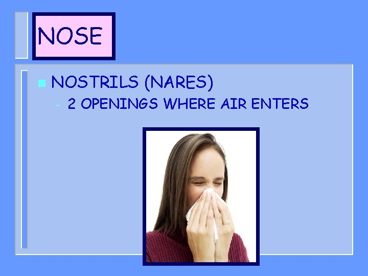 NOSE n NOSTRILS (NARES) – 2 OPENINGS WHERE AIR ENTERS