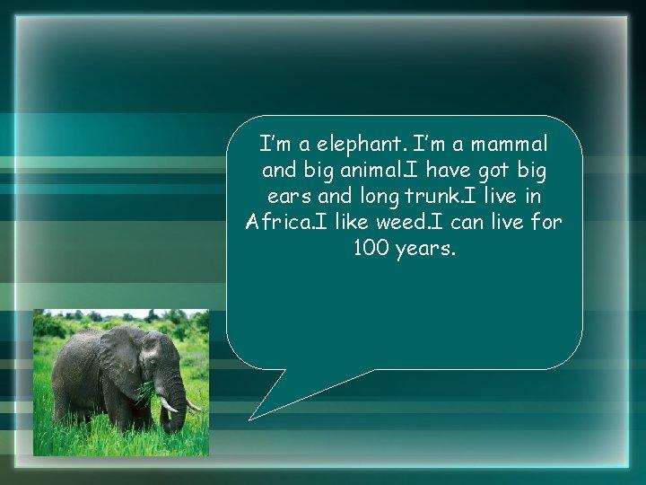 I'm a elephant. I'm a mammal and big animal. I have got big ears