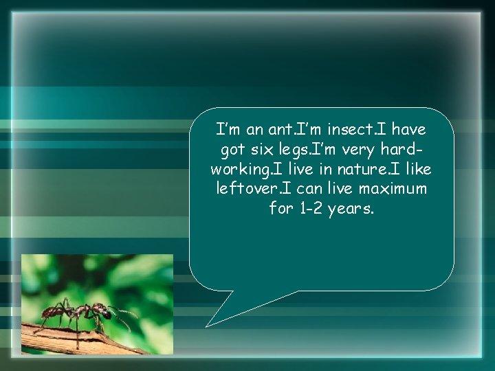 I'm an ant. I'm insect. I have got six legs. I'm very hardworking. I