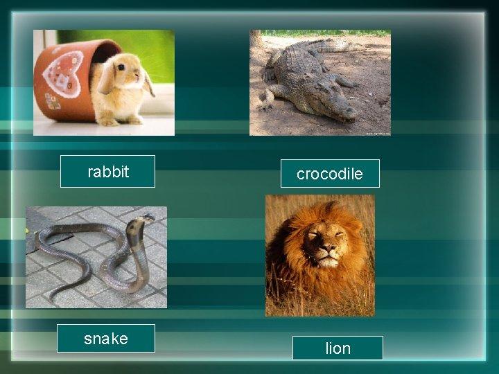 rabbit snake crocodile lion