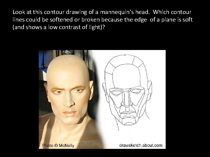 Look at this contour drawing of a mannequin's head. Which contour lines could be