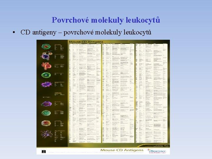 Povrchové molekuly leukocytů • CD antigeny – povrchové molekuly leukocytů