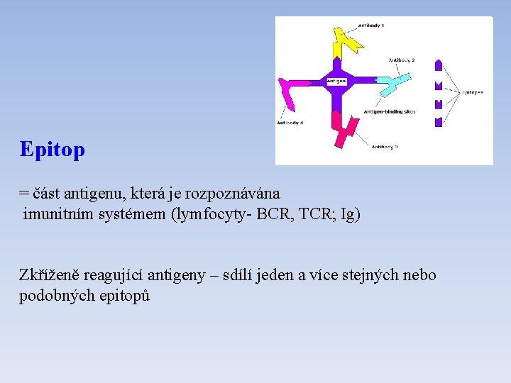 Epitop = část antigenu, která je rozpoznávána imunitním systémem (lymfocyty- BCR, TCR; Ig) Zkříženě