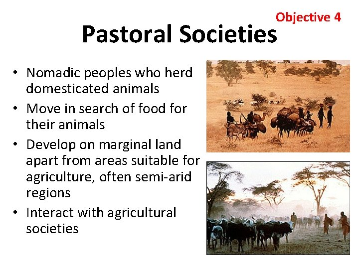 Objective 4 Pastoral Societies • Nomadic peoples who herd domesticated animals • Move in