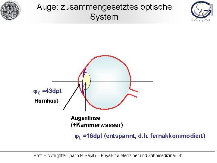 Auge: zusammengesetztes optische System φC =43 dpt Hornhaut Augenlinse (+Kammerwasser) φL =16 dpt (entspannt,