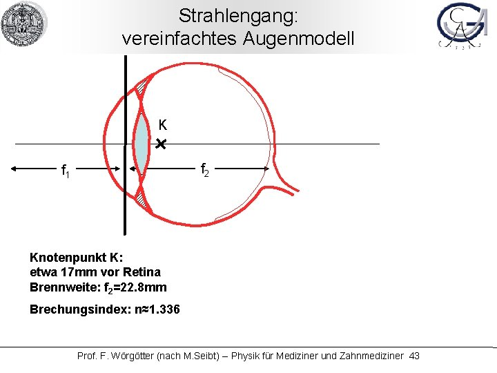 Strahlengang: vereinfachtes Augenmodell K f 2 f 1 Knotenpunkt K: etwa 17 mm vor