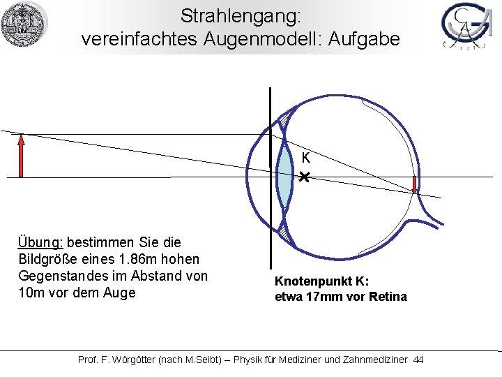 Strahlengang: vereinfachtes Augenmodell: Aufgabe K Übung: bestimmen Sie die Bildgröße eines 1. 86 m