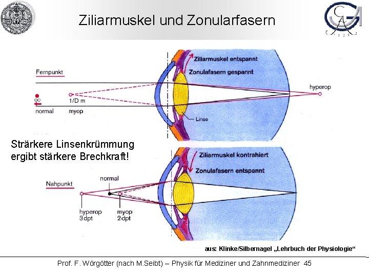 """Ziliarmuskel und Zonularfasern Strärkere Linsenkrümmung ergibt stärkere Brechkraft! aus: Klinke/Silbernagel """"Lehrbuch der Physiologie"""" Prof."""