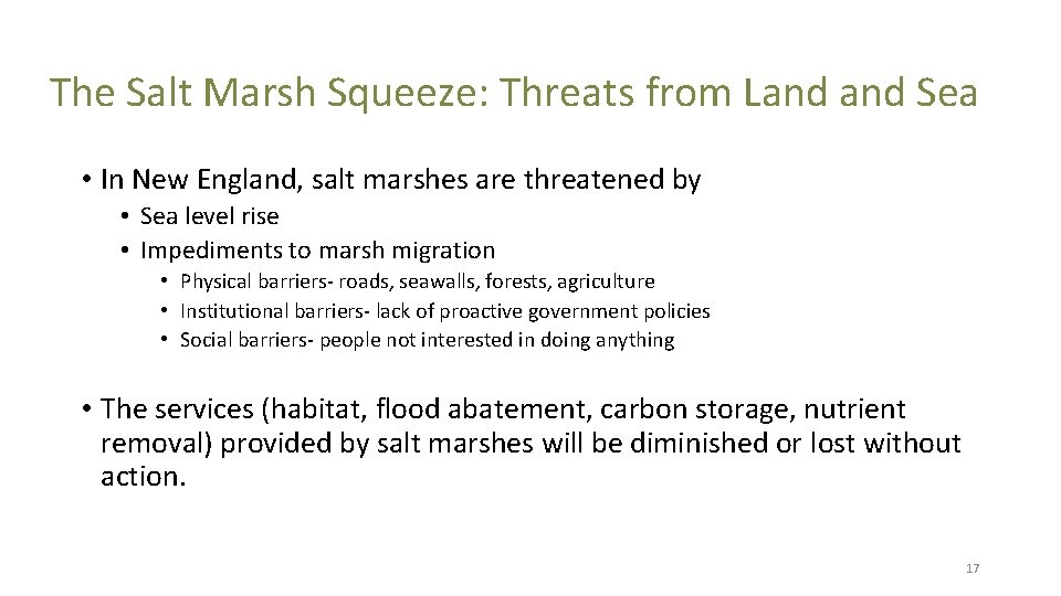 The Salt Marsh Squeeze: Threats from Land Sea • In New England, salt marshes