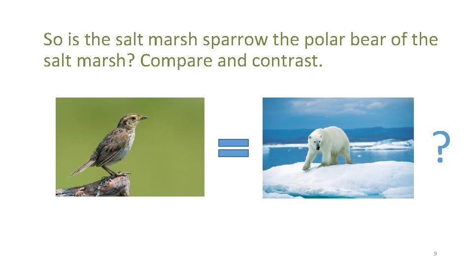 So is the salt marsh sparrow the polar bear of the salt marsh? Compare