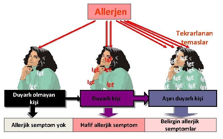 Allerjen İlk temas Ig. E Duyarlı olmayan kişi Allerjik semptom yok Tekrarlanan temaslar Ig.