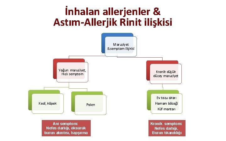 İnhalan allerjenler & Astım-Allerjik Rinit ilişkisi Maruziyet &semptom ilişkisi Yoğun maruziyet, Hızlı semptom Kedi,