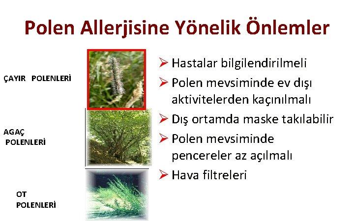 Polen Allerjisine Yönelik Önlemler ÇAYIR POLENLERİ AGAÇ POLENLERİ OT POLENLERİ Ø Hastalar bilgilendirilmeli Ø