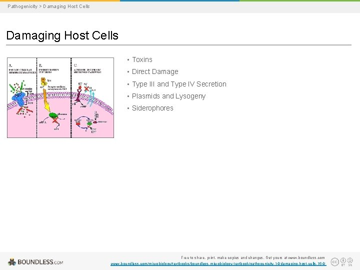 Pathogenicity > Damaging Host Cells • Toxins • Direct Damage • Type III and