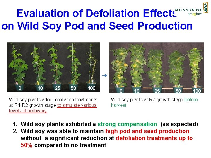 Evaluation of Defoliation Effects on Wild Soy Pod and Seed Production 0 10 25