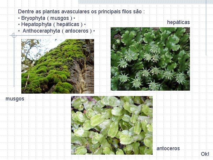 Dentre as plantas avasculares os principais filos são : • Bryophyta ( musgos )