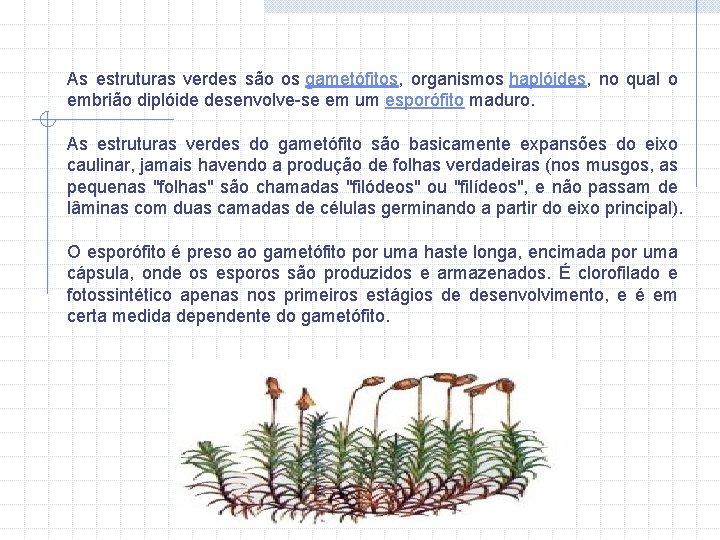 As estruturas verdes são os gametófitos, organismos haplóides, no qual o embrião diplóide