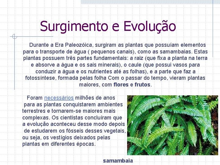 Surgimento e Evolução Durante a Era Paleozóica, surgiram as plantas que possuíam elementos para