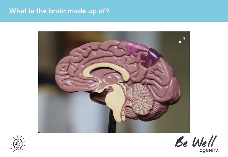 What is the brain made up of?