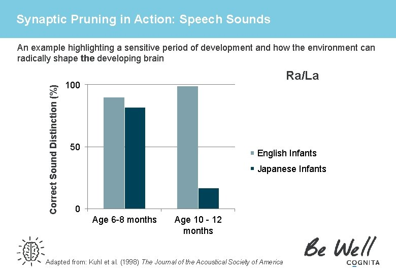 Synaptic Pruning in Action: Speech Sounds Correct Sound Distinction (%) An example highlighting a