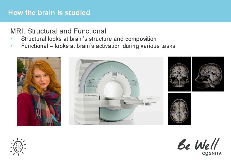 How the brain is studied MRI: Structural and Functional • • Structural looks at