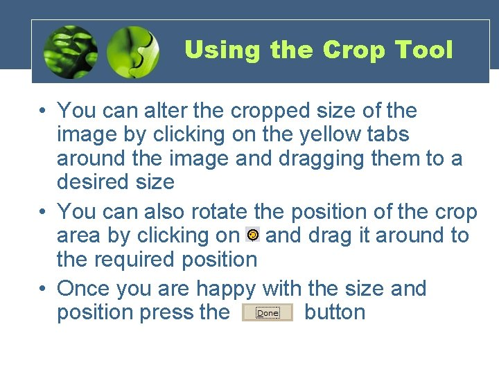 Using the Crop Tool • You can alter the cropped size of the image