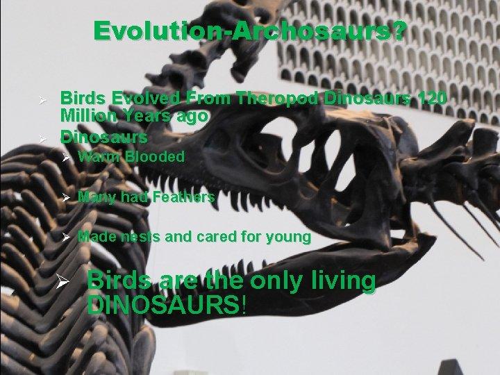 Evolution-Archosaurs? Ø Ø Birds Evolved From Theropod Dinosaurs 120 Million Years ago Dinosaurs Ø