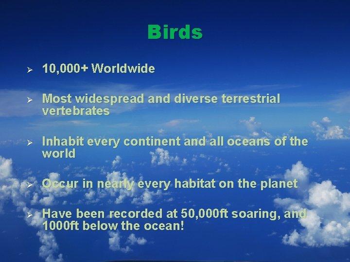 Birds Ø 10, 000+ Worldwide Ø Most widespread and diverse terrestrial vertebrates Ø Inhabit