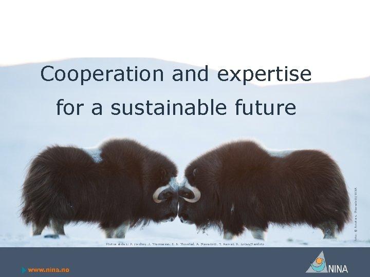 Cooperation and expertise Foto: © Arnstein. Staverløkk/NINA for a sustainable future Photos slide 1: