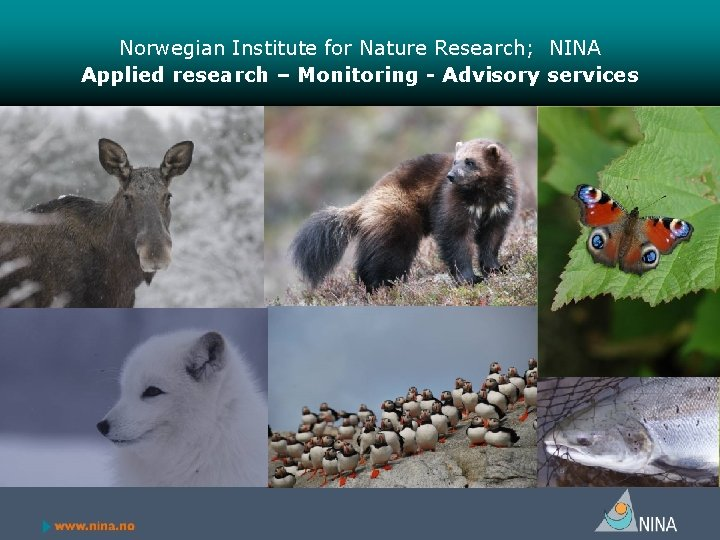 Norwegian Institute for Nature Research; NINA Applied research – Monitoring - Advisory services Photos: