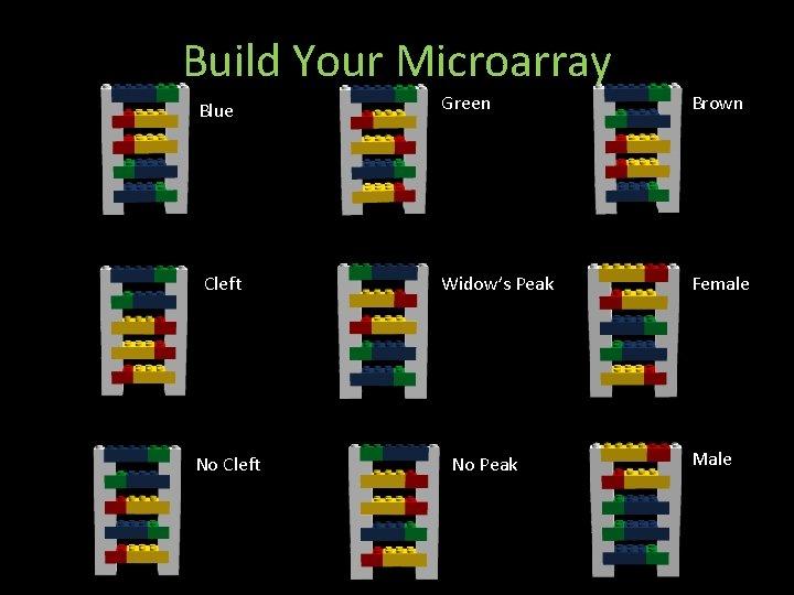 Build Your Microarray Blue Green Brown Cleft Widow's Peak Female No Cleft No Peak