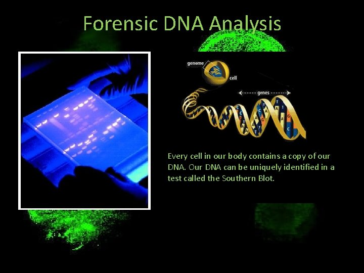 Forensic DNA Analysis Every cell in our body contains a copy of our DNA.