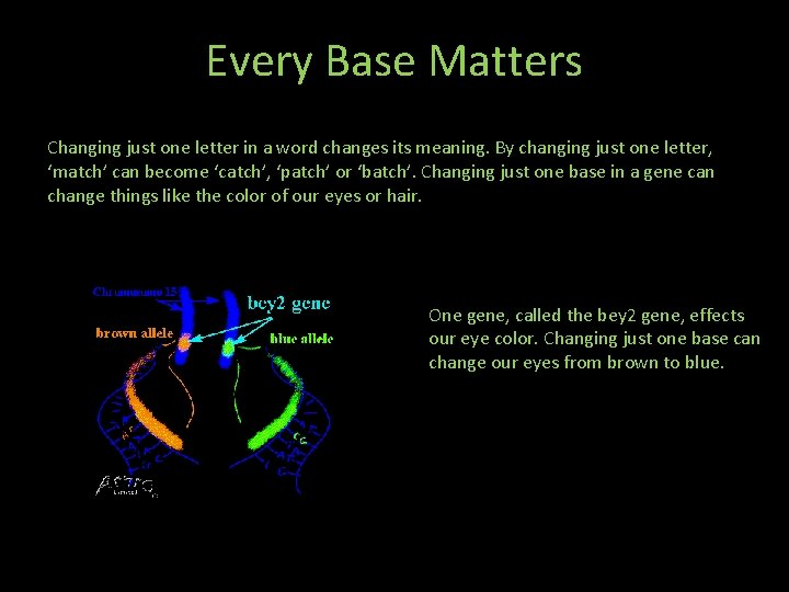 Every Base Matters Changing just one letter in a word changes its meaning. By