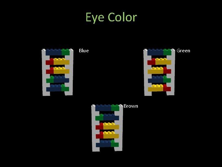 Eye Color Blue Green Brown