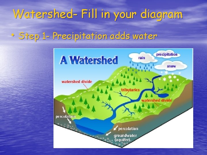 Watershed- Fill in your diagram • Step 1 - Precipitation adds water