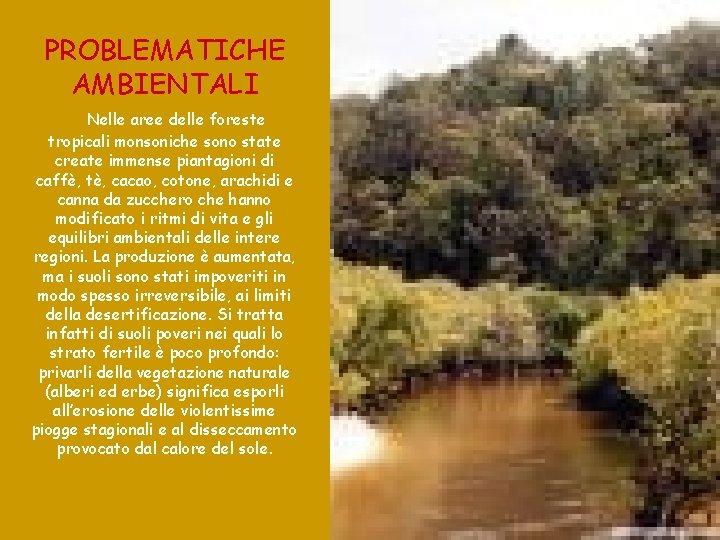 PROBLEMATICHE AMBIENTALI Nelle aree delle foreste tropicali monsoniche sono state create immense piantagioni di
