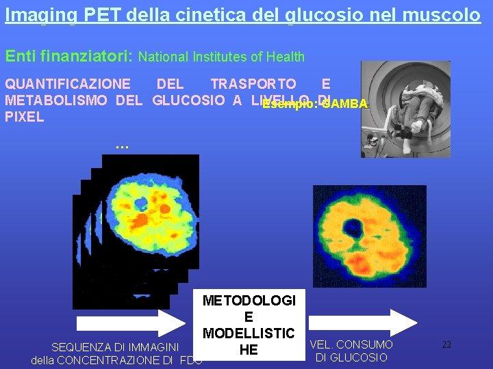 Imaging PET della cinetica del glucosio nel muscolo Enti finanziatori: National Institutes of Health