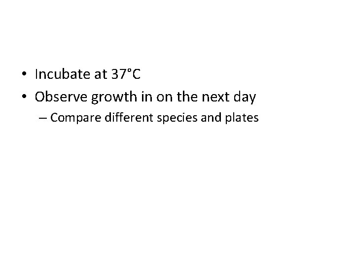 • Incubate at 37°C • Observe growth in on the next day –