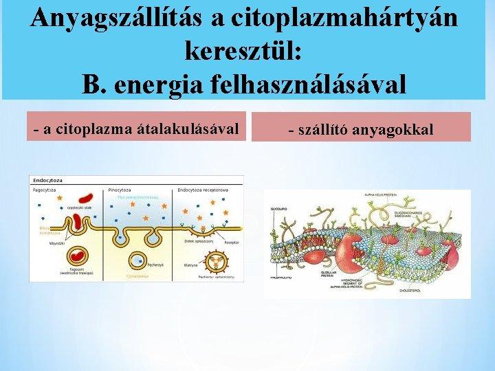 Anyagszállítás a citoplazmahártyán keresztül: B. energia felhasználásával - a citoplazma átalakulásával - szállító anyagokkal