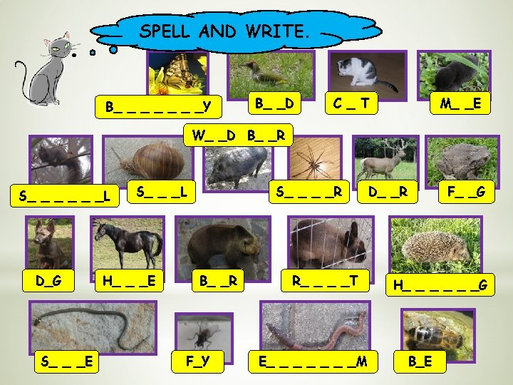 SPELL AND WRITE. B_ _ _ _Y B_ _D C _ T M_ _E
