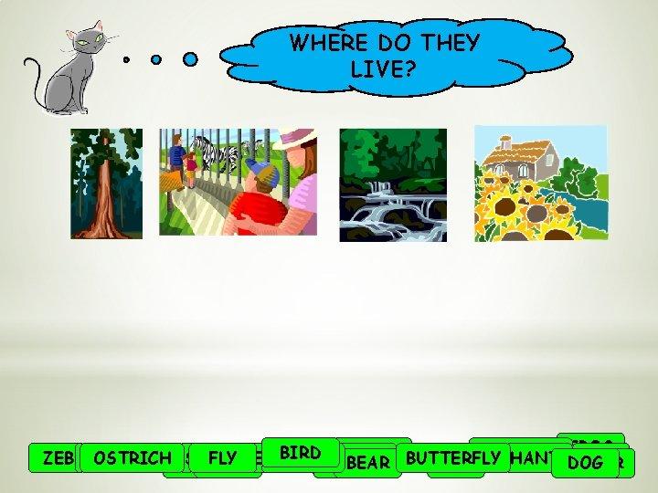 WHERE DO THEY LIVE? BIRD TIGER BUTTERFLY MONKEY FROG ZEBRA HEDGEHOG EARTHWORM OSTRICH BEE