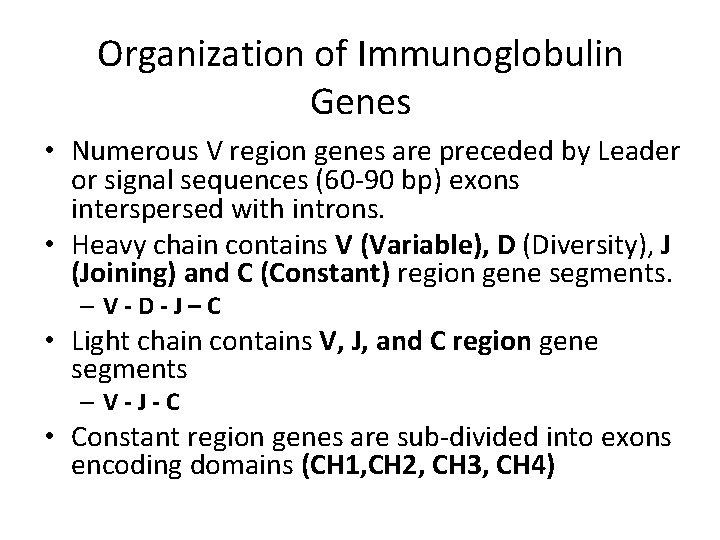 Organization of Immunoglobulin Genes • Numerous V region genes are preceded by Leader or