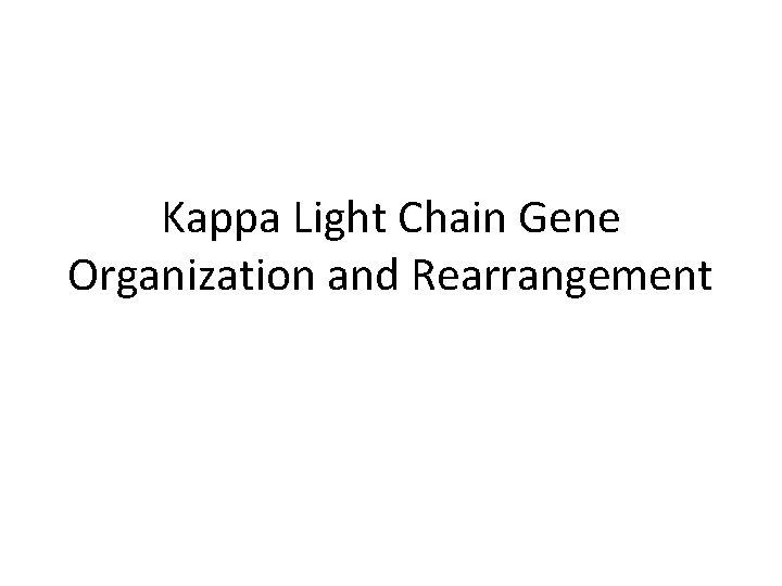 Kappa Light Chain Gene Organization and Rearrangement