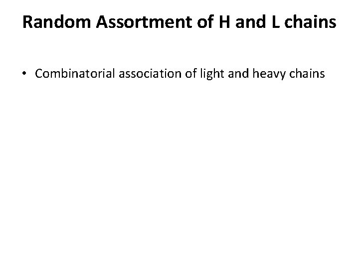 Random Assortment of H and L chains • Combinatorial association of light and heavy